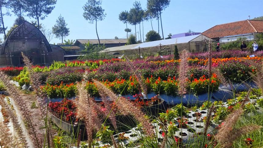 Kebun Bunga Cihideung Kebun Bunga Cihideung Cover - Dolan Dolen