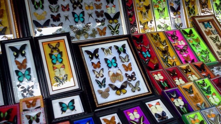 Kerajaan Kupu-kupu Bantimurung Kerajaan Kupu kupu Bantimurung - Dolan Dolen