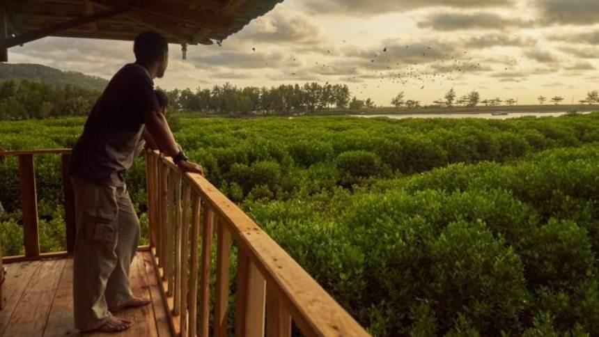 Mangrove Logending Mangrove Logending - Dolan Dolen