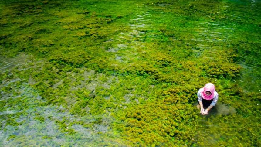Sumber Mata Air Sirah Gondanglegi Sumber Mata Air Sirah Gondanglegi - Dolan Dolen