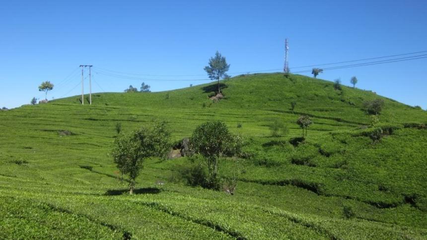 Agrowisata Gunung Mas Agrowisata Gunung Mas - Dolan Dolen