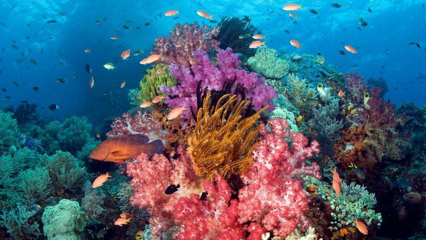 Raja Ampat Bawah Laut Raja Ampat Bawah Laut - Dolan Dolen