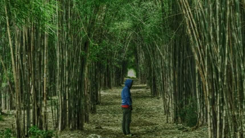 Hutan Bambu Keputih Surabaya Hutan Bambu Keputih Surabaya - Dolan Dolen