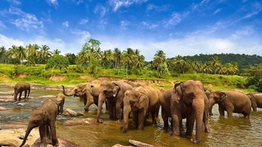 Taman Nasional Way Kambas Lampung Taman Nasional Way Kambas Lampung - Dolan Dolen