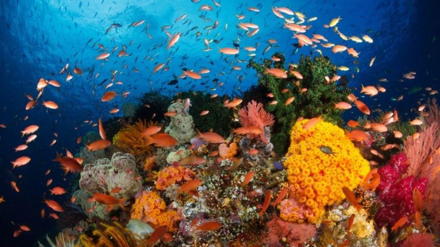 Raja Ampat Underwater Raja Ampat Underwater - Dolan Dolen