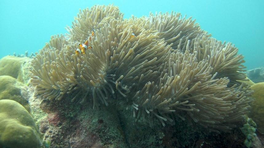 Bawah Laut Meulingge Bawah Laut Meulingge - Dolan Dolen