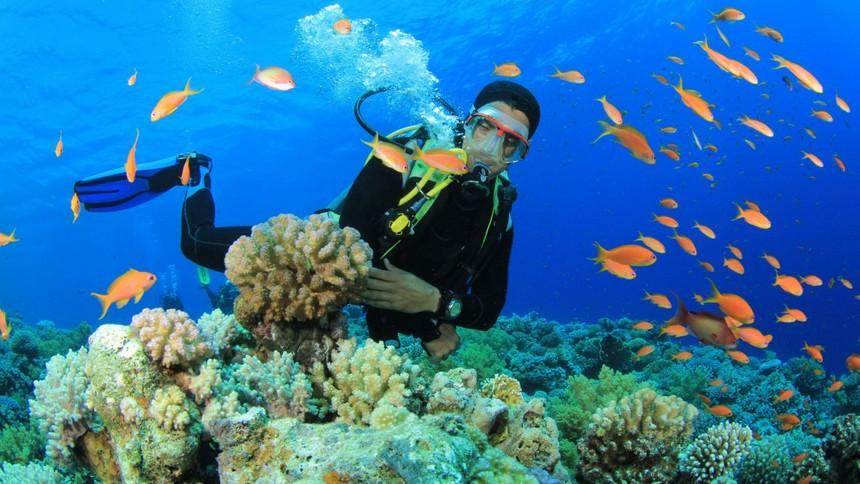 Pulau Derawan Diving Pulau Derawan Diving - Dolan Dolen