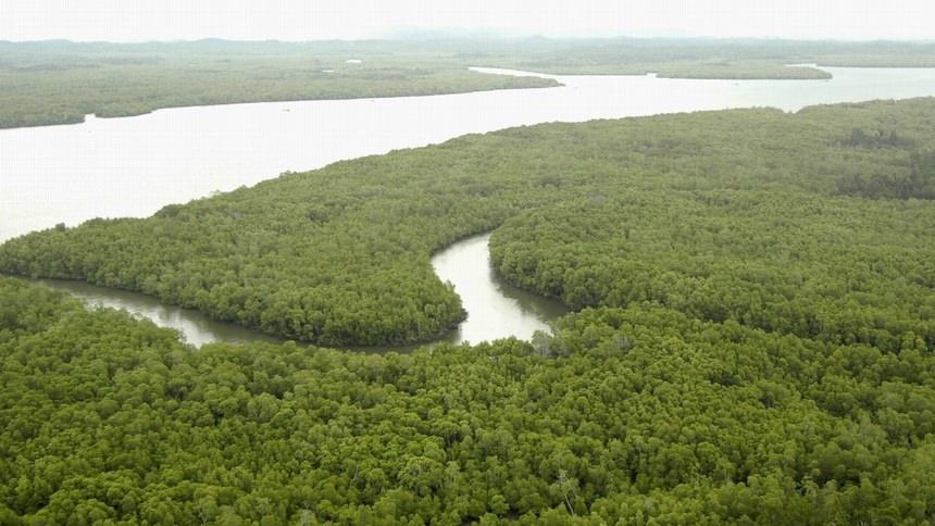 Hutan Mangrove Kalimantan Hutan Mangrove Kalimantan - Dolan Dolen
