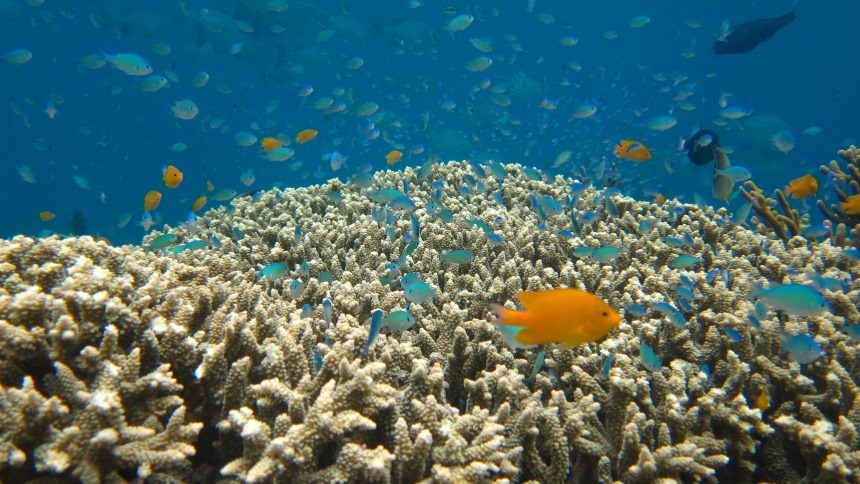 Bawah Laut Pulau Menjangan Bawah Laut Pulau Menjangan - Dolan Dolen