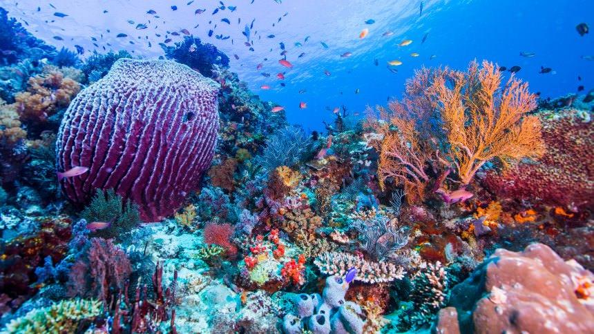 Pulau Komodo Underwater Pulau Komodo Underwater - Dolan Dolen
