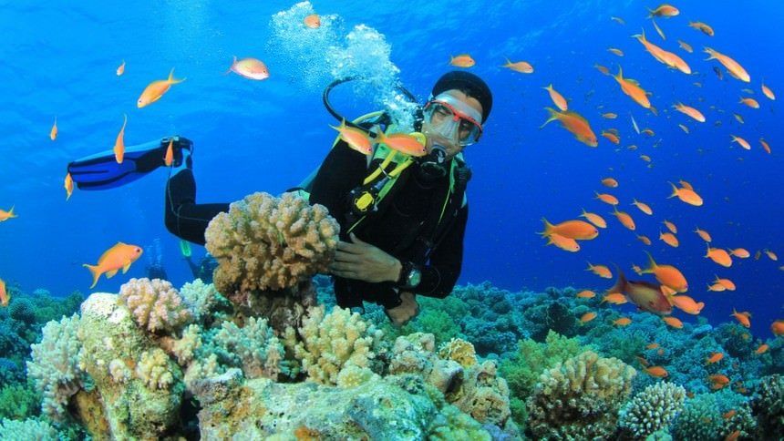 Bawah Laut Kepulauan Derawan Bawah Laut Kepulauan Derawan - Dolan Dolen