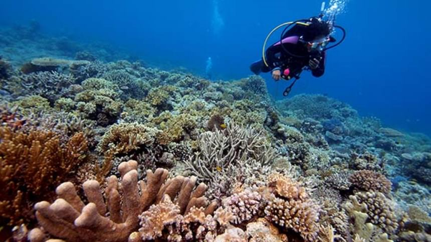 Kadidiri Diving Kadidiri Diving - Dolan Dolen