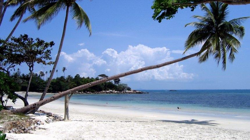 Pepohonan di Pantai Trikora Pepohonan di Pantai Trikora - Dolan Dolen