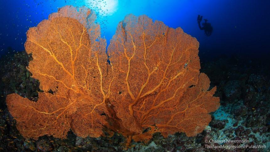 Keindahan Taman Laut Rubiah Keindahan Taman Laut Rubiah - Dolan Dolen