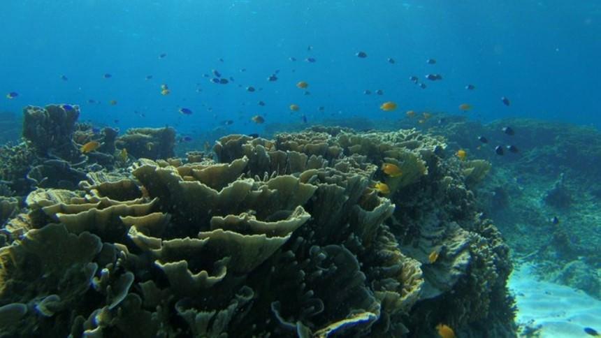 Pulau Tabuhan Underwater Pulau Tabuhan Underwater - Dolan Dolen
