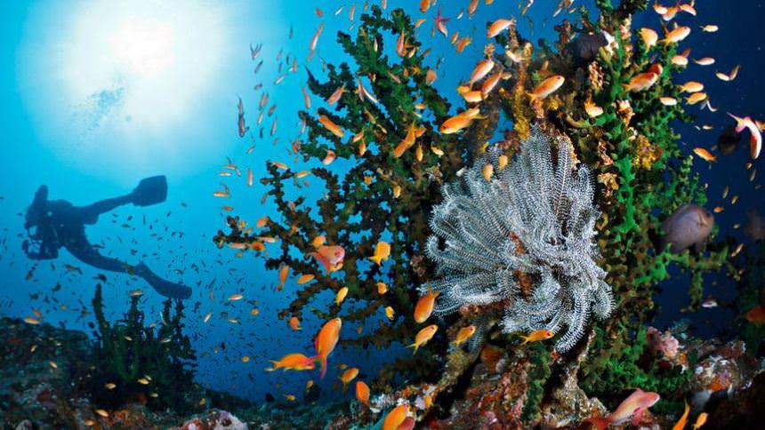 Taman Laut Pulau Rubiah Taman Laut Pulau Rubiah - Dolan Dolen