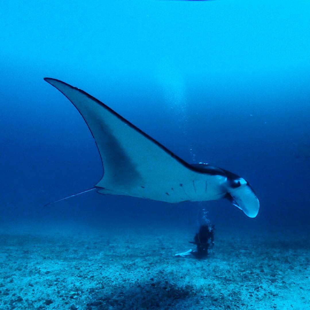 Manta Point, Perairan Pulau Komodo, Flores, NTT Manta Point by Mr - Dolan Dolen