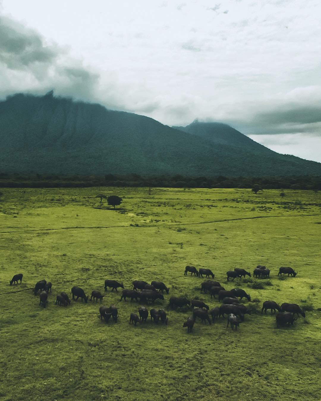 Baluran National Park, Banyuwangi - Jawa Timur Taman Nasional baluran by Joeadimara Dolaners - Dolan Dolen