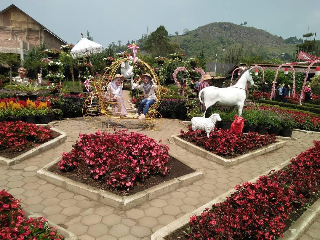 Taman Bunga Begonia Lembang, Taman Bunga Begonia, Taman Bunga Lembang, Bandung, Dolan Dolen, Dolaners Taman Bunga Begonia Lembang by hanaldiani - Dolan Dolen