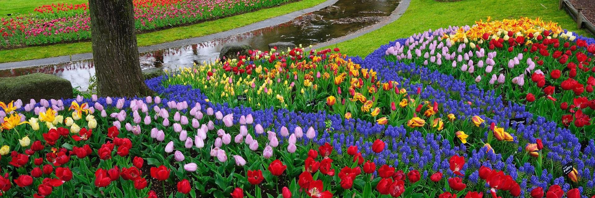 Perlu Bunga Di Bandung Yuk Ke 8 Taman Bunga Dan Florist Ini