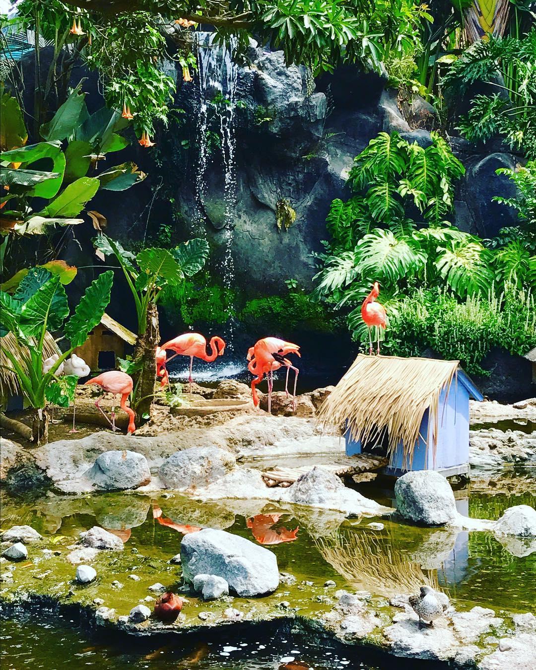 Batu Secret Zoo, Batu Secret Zoo Kota Batu, Malang Raya, Dolan Dolen, Dolaners Batu Secret Zoo via dna laras - Dolan Dolen