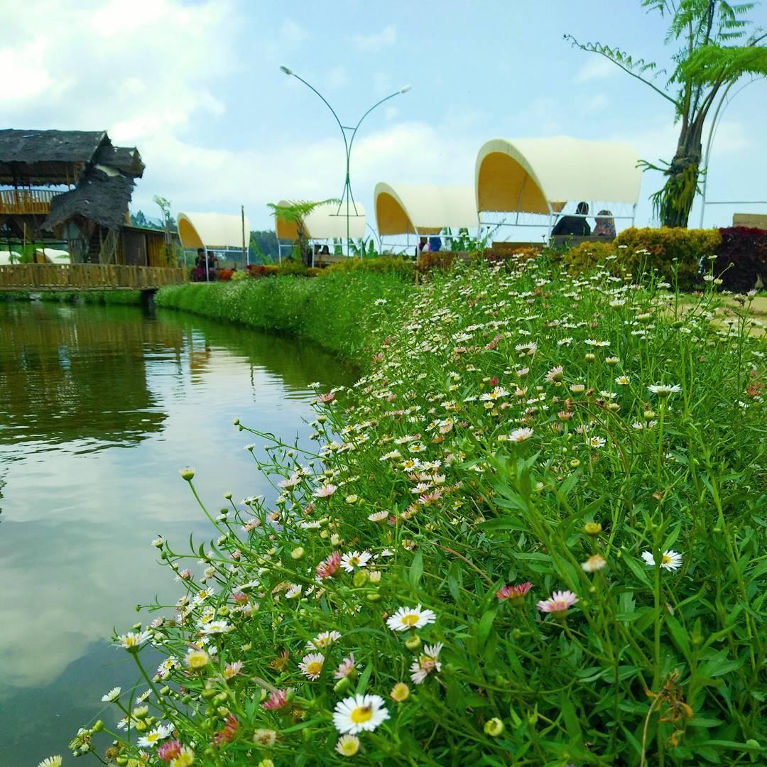 Cafe Sawah, Malang Raya, Dolan Dolen, Dolaners Cafe Sawah via febrian - Dolan Dolen
