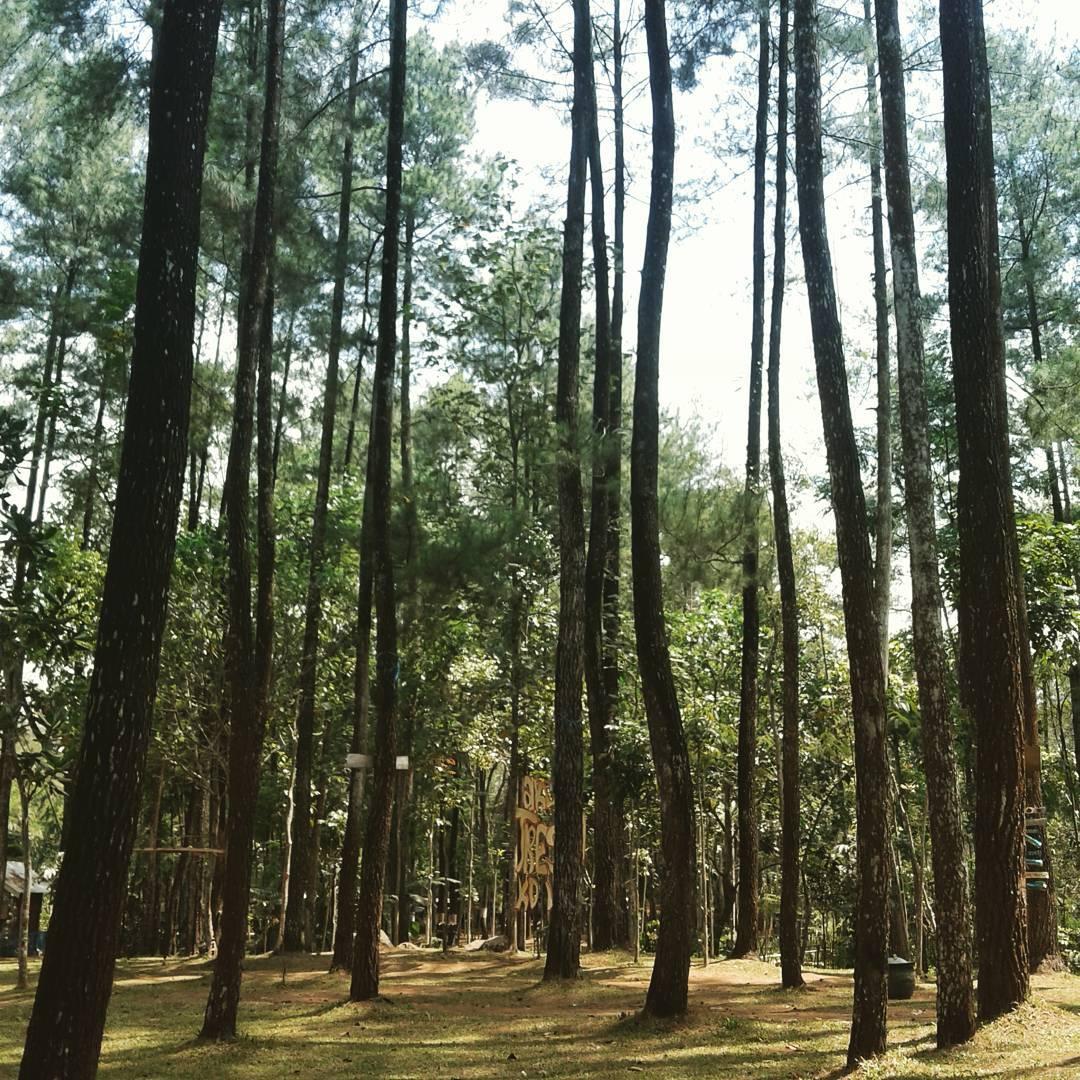Hutan Pinus Candi Sumber Awan Malang, Malang, Malang Raya, Dolan Dolen, Dolaners Hutan Pinus Candi Sumber Awan via luluk almira90 - Dolan Dolen