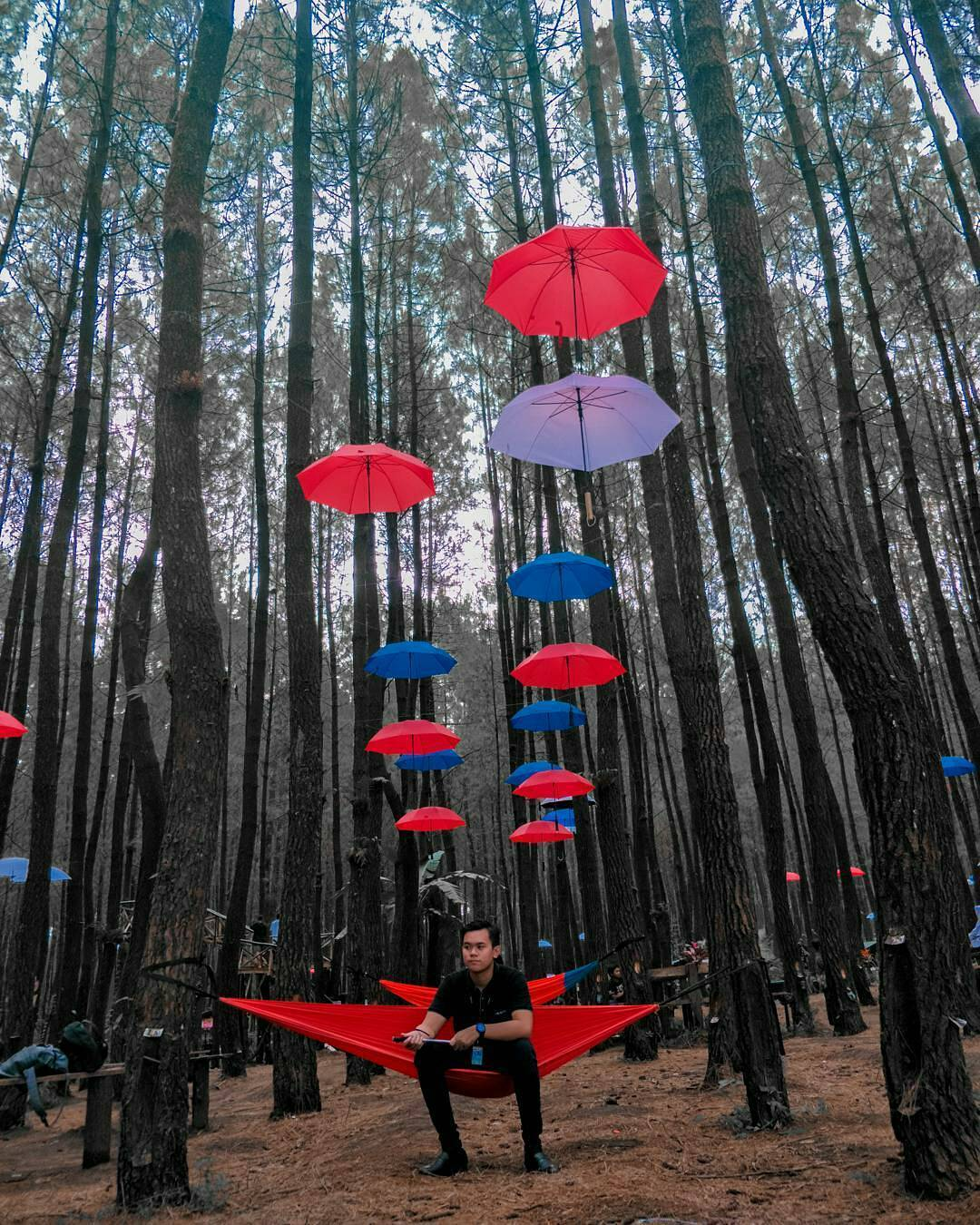 Keindahan 5 Hutan Pinus di Malang Raya, Sayang Bila Dilewatkan