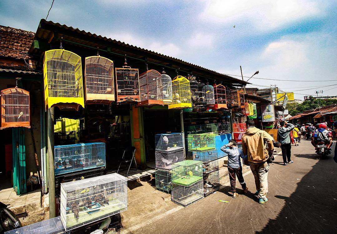 Pasar Burung Splendid, Pasar Burung Splendid Malang, Kota Malang, Malang Raya, Dolan Dolen, Dolaners Pasar Burung Malang via endro bawono - Dolan Dolen