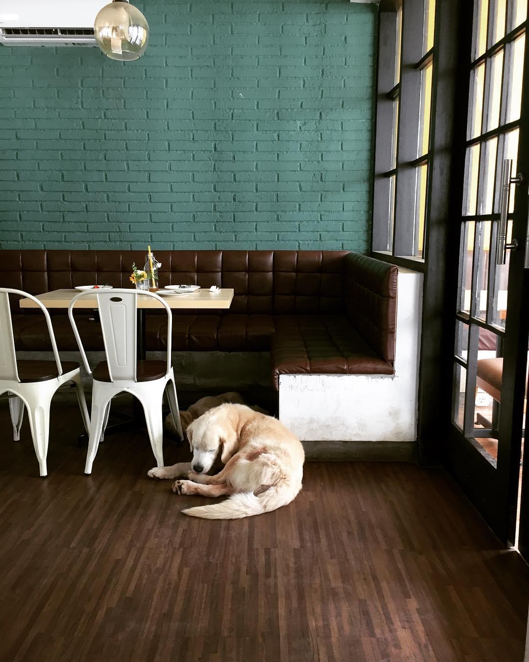 Pawvillion Dog Cafe, Pawvillion Dog Cafe Malang, Kota Malang, Malang Raya, Dolan Dolen Pawvillion Dog Cafe via gheacla - Dolan Dolen