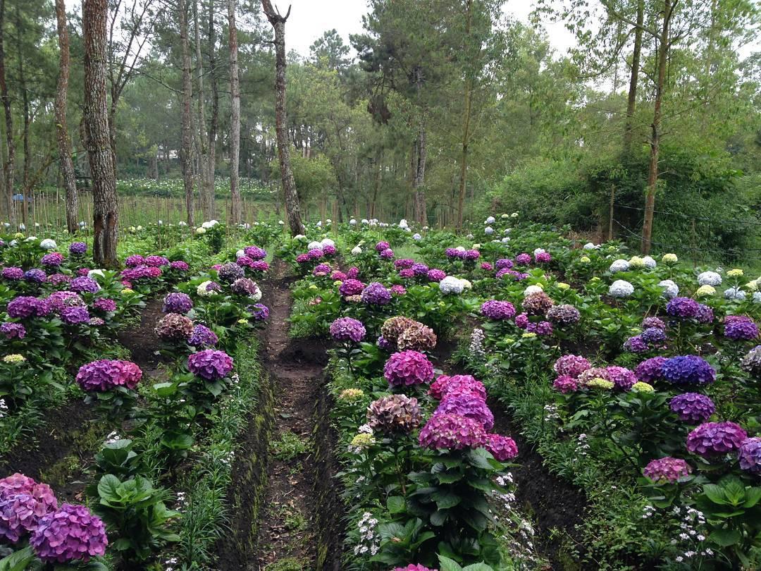 Taman Bunga Coban Talun, Taman Bunga Coban Talun Malang Raya, Malang Raya, Dolan Dolen, Dolaners Taman Bunga Coban Talun via amelvincenti21 - Dolan Dolen