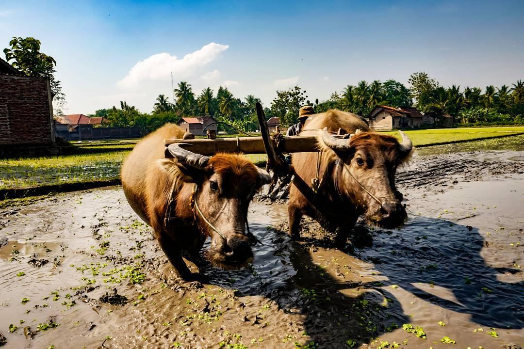Candran, Candran Yogyakarta, Yogyakarta, Dolan Dolen, Dolaners Candran via koesnindar - Dolan Dolen