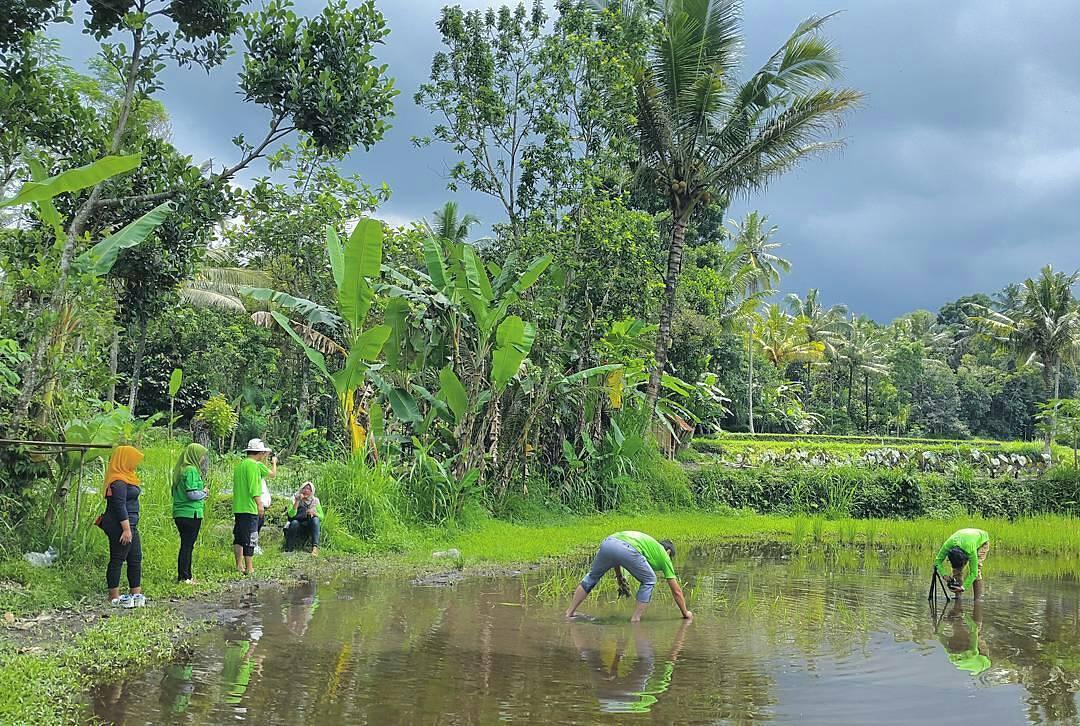 Pentingsari, Pentingsari Yogyakarta, Yogyakarta, Dolan Dolen, Dolaners Pentingsari by trisnoarybudi - Dolan Dolen