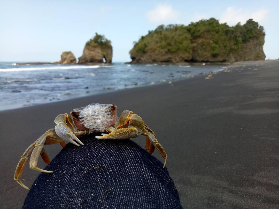 Biota Pantai, Biota Pantai Malang, Malang, Kabupaten Malang, Dolan Dolen, Dolaners Biota Pantai via bektiari 89 - Dolan Dolen
