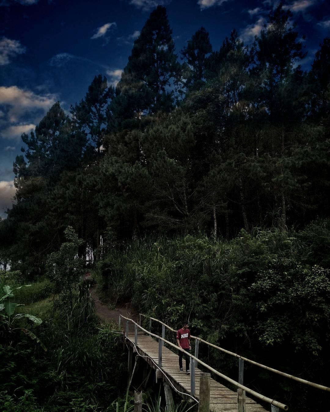 Hutan Pekat di Bumi Perkemahan, Malang, Malang Raya, Dolan Dolen, Dolaners Hutan Pekat Bumi Perkemahan Kota Batu via n - Dolan Dolen