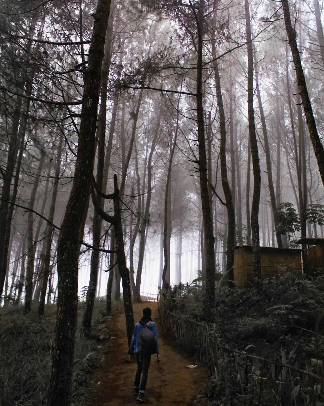 Kabut Hutan Pinus yang Menyimpan Misteri, Malang, Malang Raya, Dolan Dolen, Dolaners Kabut Hutan Pinus yang Misterius via bagoezduwi - Dolan Dolen
