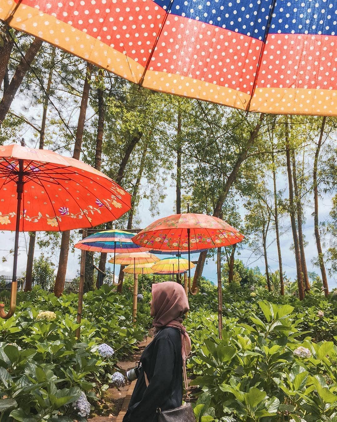 Semarak Payung Warna Warni di Taman Bunga, Malang, Malang Raya, Dolan Dolen, Dolaners Payung Warna Warni di Taman Bunga by wahyueko - Dolan Dolen