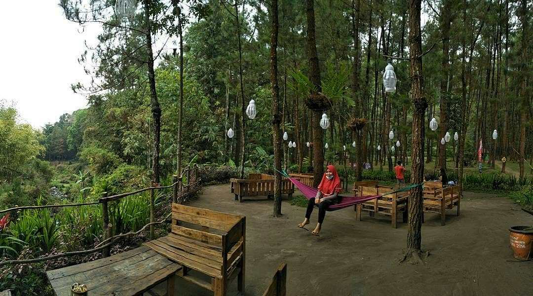 4 Wisata Hutan Pinus Ter Hits Di Kota Malang