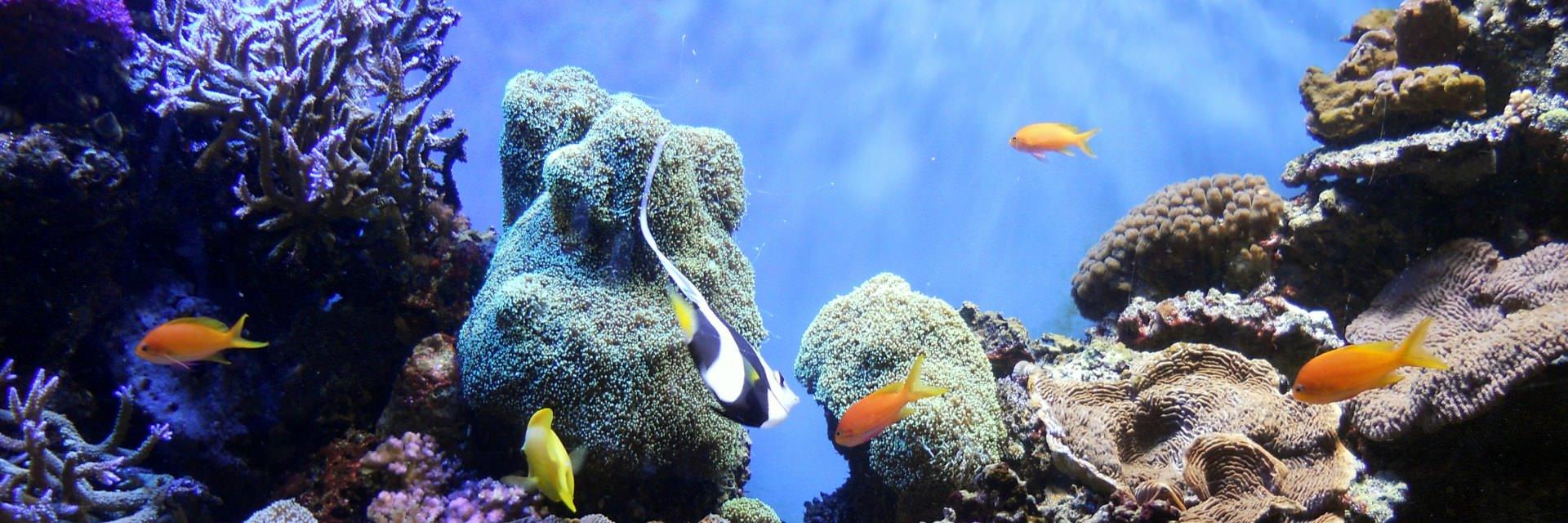 10 Wisata Alam Tersembunyi di Manado 10 Wisata Alam Tersembunyi di Manado - Dolan Dolen