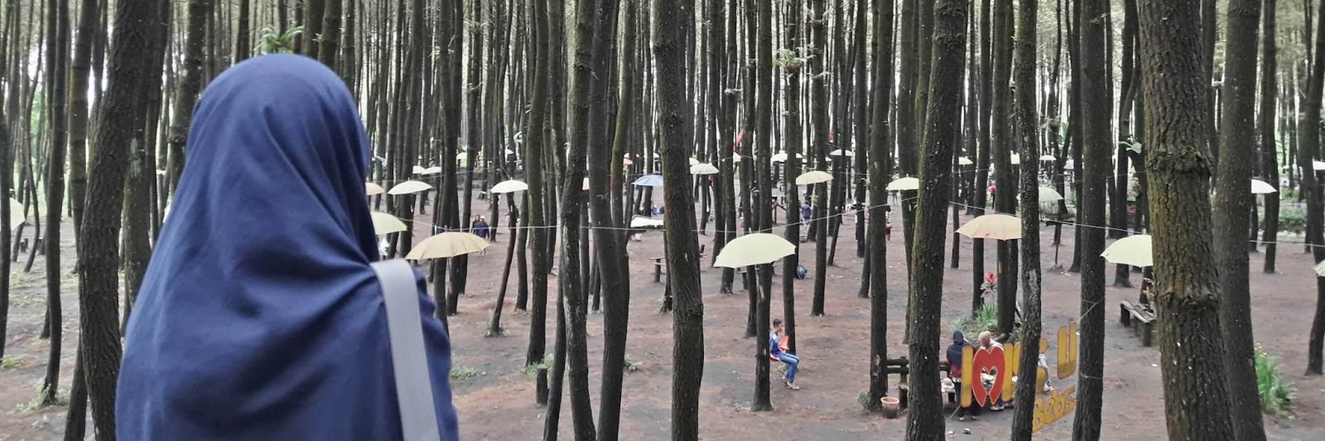 4 Wisata Hutan Pinus Ter-Hits di Kota Malang 4 Wisata Hutan Pinus Ter Hits di Kota Malang - Dolan Dolen