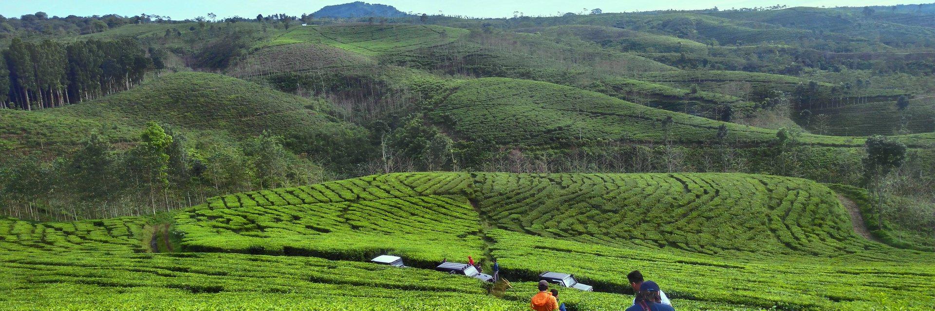 4 Wisata Kebun Teh Paling Hits di Jawa Timur 4 Wisata Kebun Teh Paling Hits di Jawa Timur - Dolan Dolen