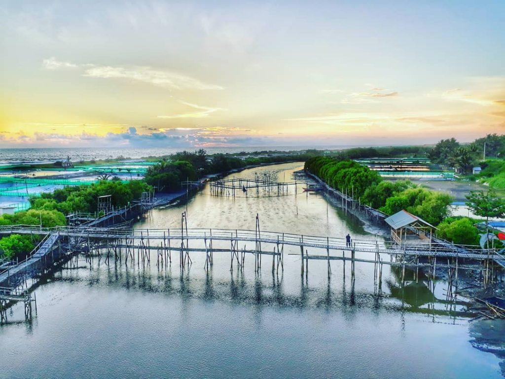 Mangrove Pantai Pasir Kadilangu