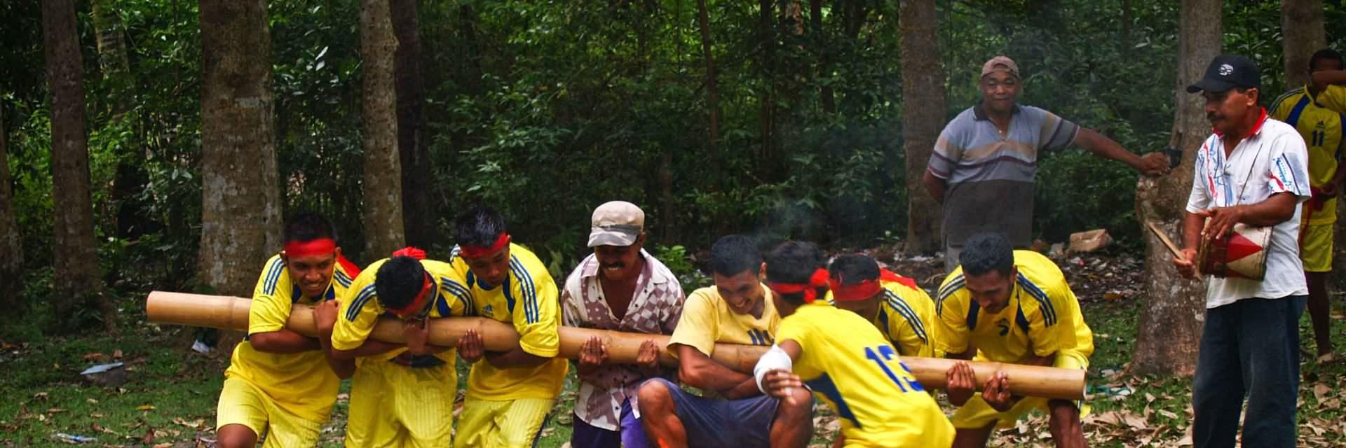 Misteri Dibalik Bambu Gila Maluku Misteri Dibalik Bambu Gila Maluku - Dolan Dolen