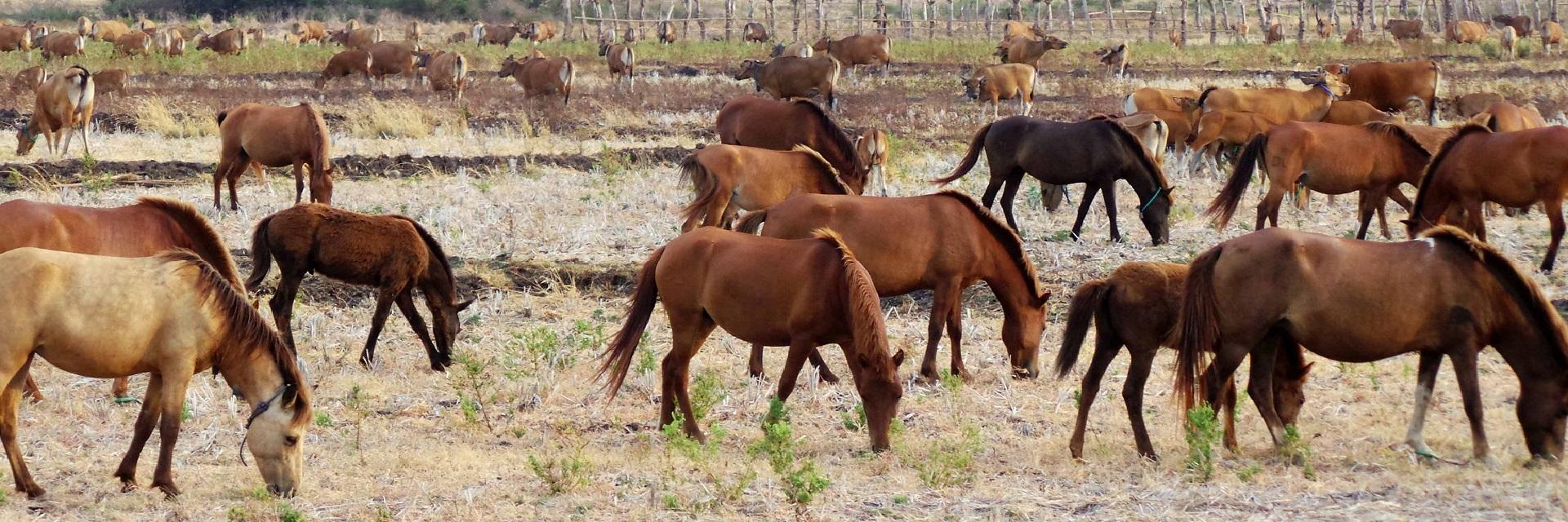 10 Wisata Seru di Peternakan Kuda Mega Star, Kota Batu - Malang Raya