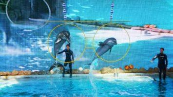 Samudra Dolphin Park Ancol Samudra Dolphin Park Ancol 355x200 - Dolan Dolen