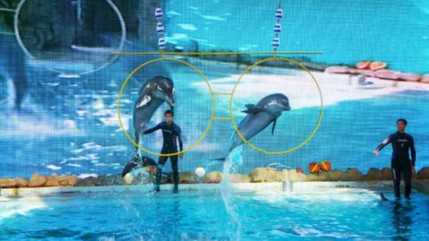 Samudra Dolphin Park Ancol