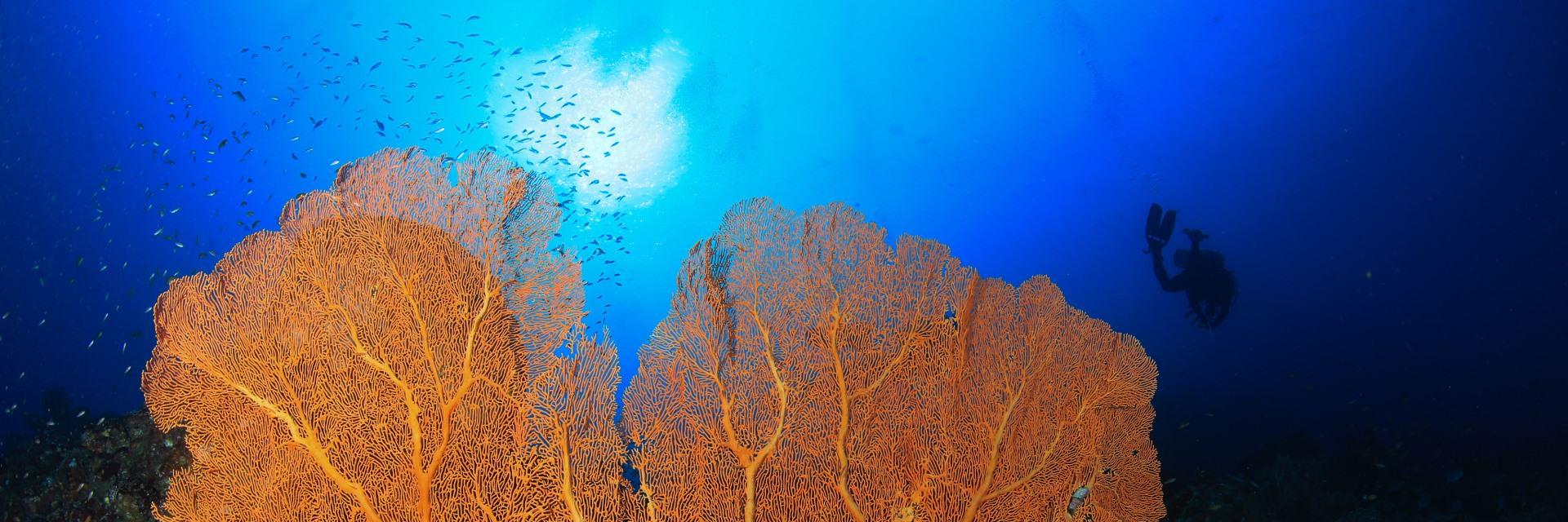 Taman Laut Pulau Rubiah Si Cantik Kota Sabang Taman Laut Pulau Rubiah Si Cantik Kota Sabang 2 - Dolan Dolen