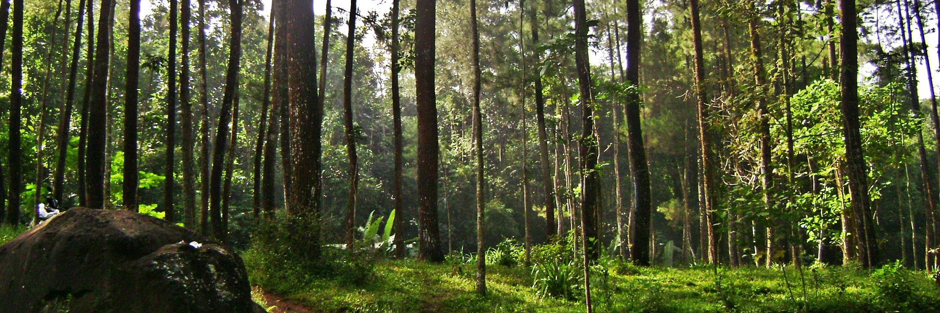 hutan pinus malang, Malang, Malang Raya, Dolan Dolen, Dolaners hutan pinus malang via ganti - Dolan Dolen