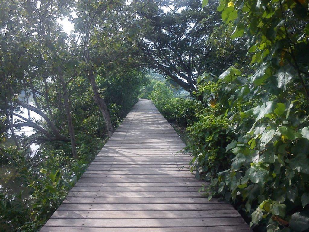 Wonorejo Mangrove Ecotourism